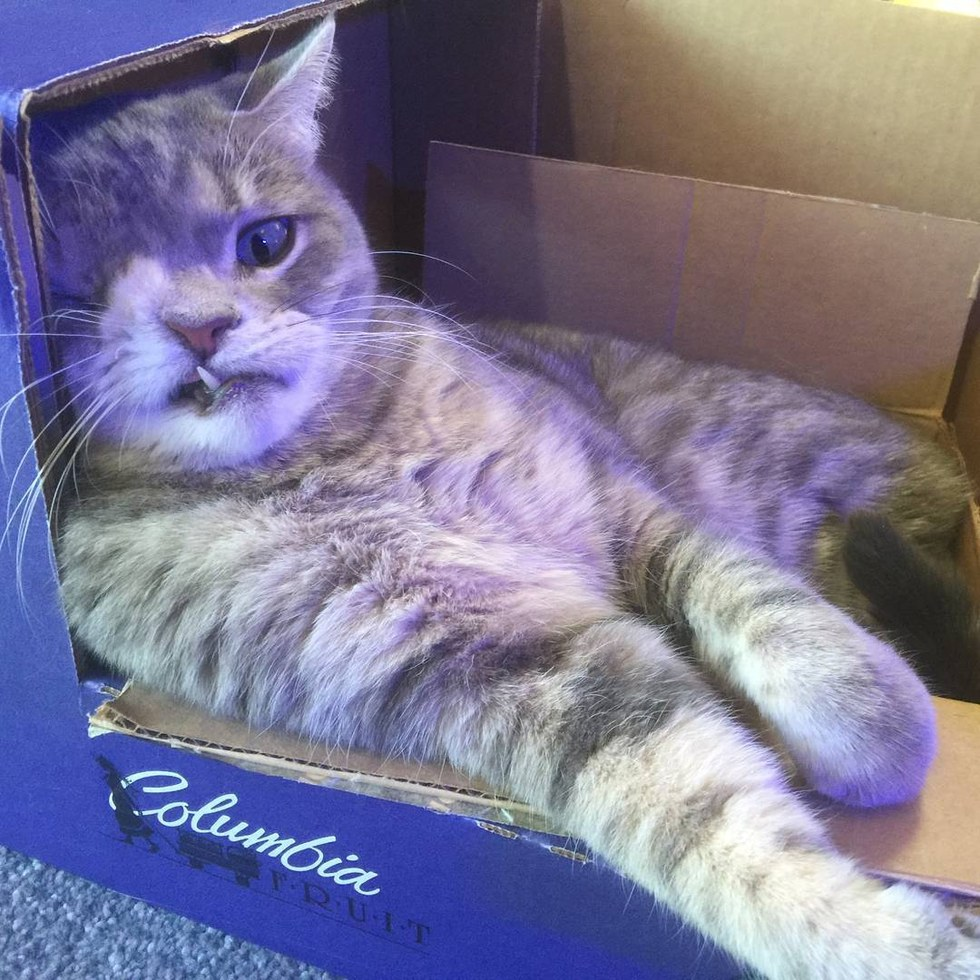 dizzy le chat borgne star du web