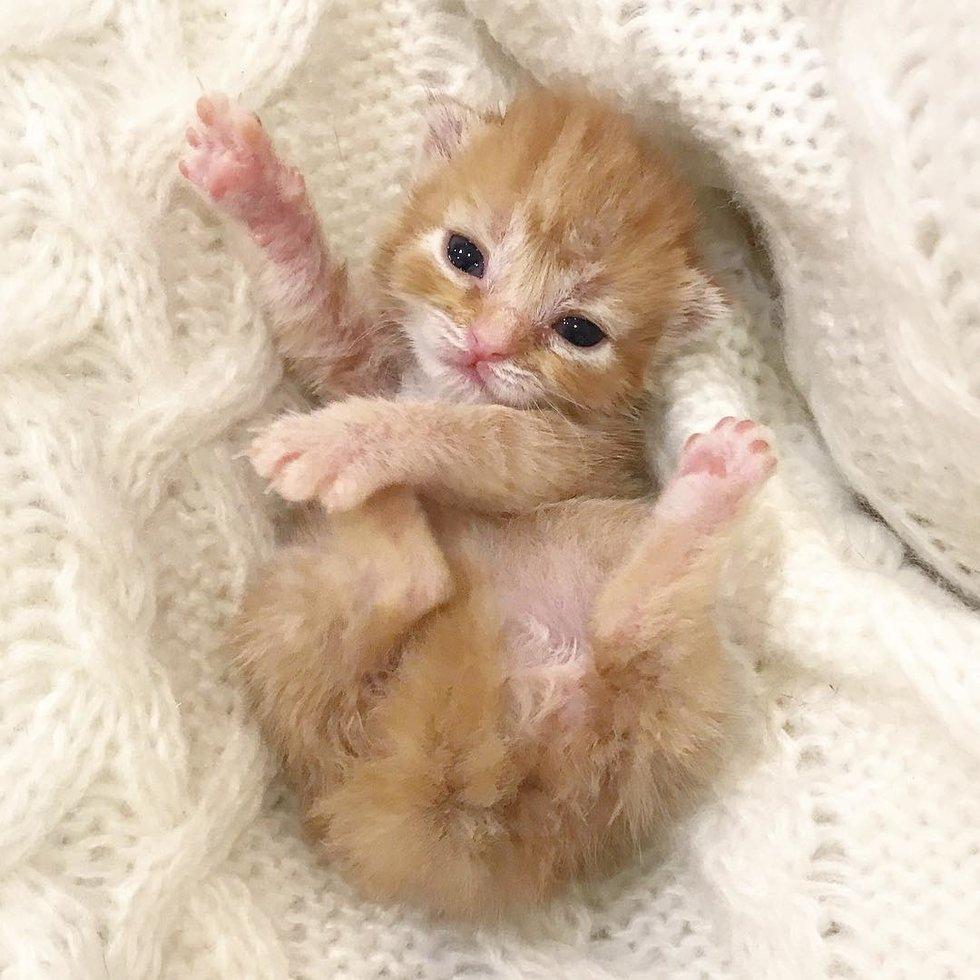 petite chatte rousse