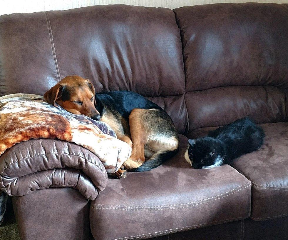 chatte chien canapé