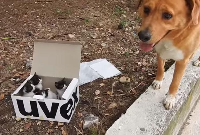 chien sauve chatons boite