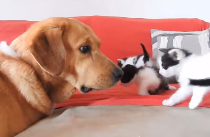 chien bisous chats