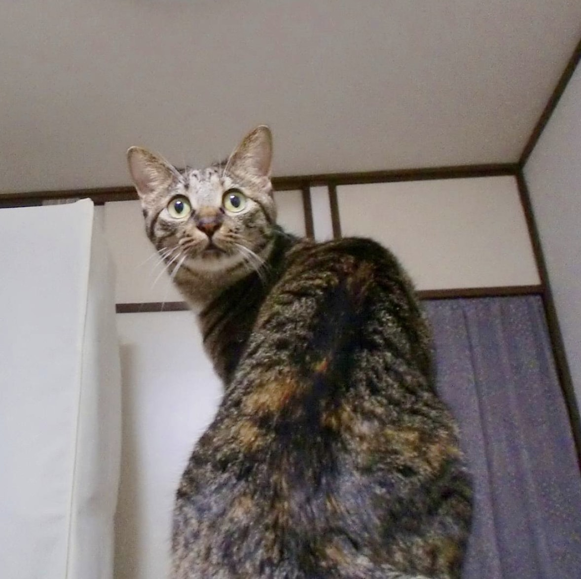 chat surpris