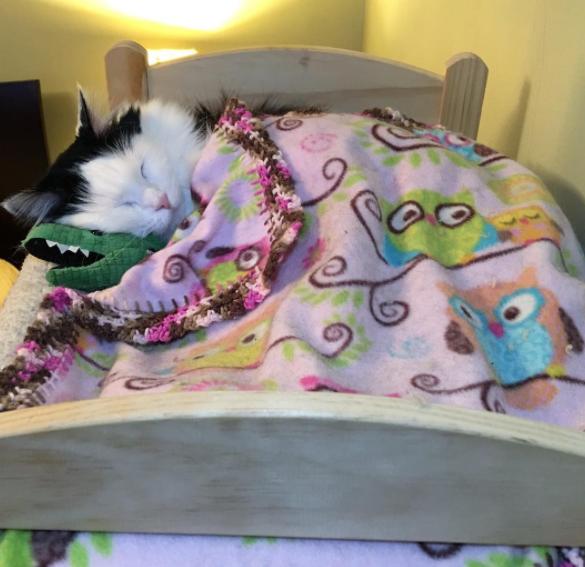Une chatte sauvée d'un refuge dort tous les jours dans un lit de poupée et c'est adorable !