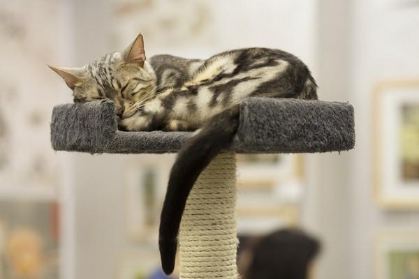 Pourquoi les chats dorment-ils tout le temps ?