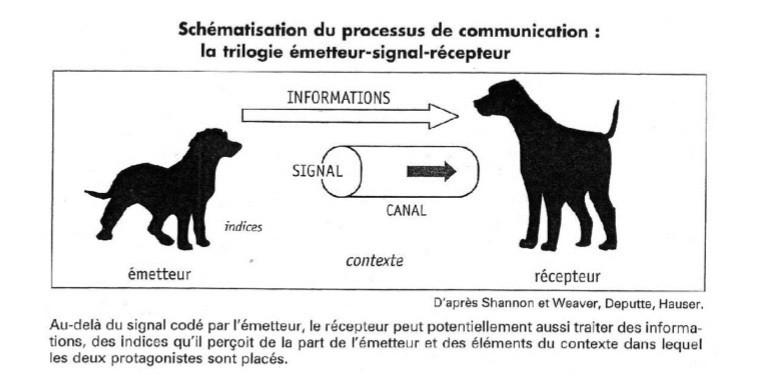 Comment le chien communique