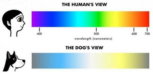 Les 5 sens du chien