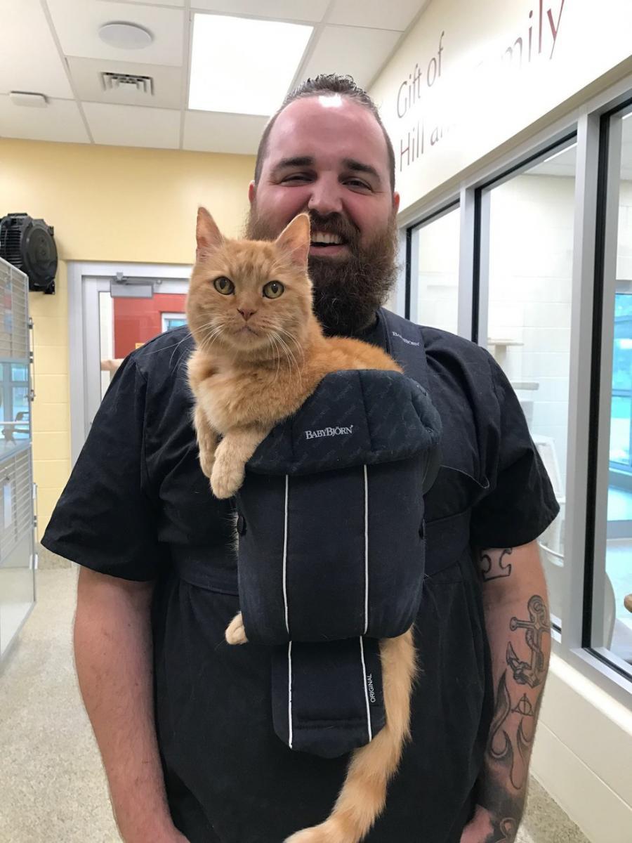 chat roux porte bébé