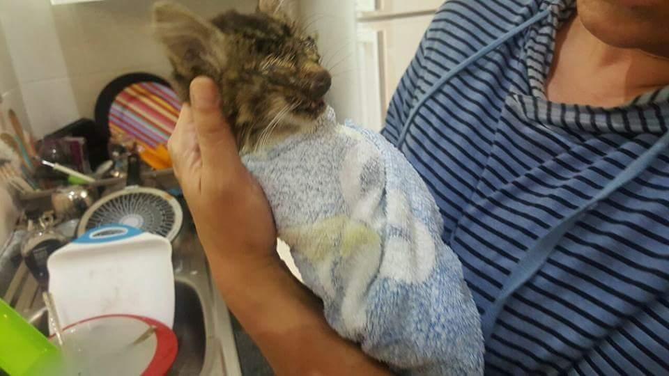 chat sauvé sud afrique