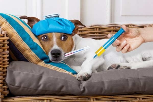Mon chien (ou mon chat) peut-il attraper la grippe ?