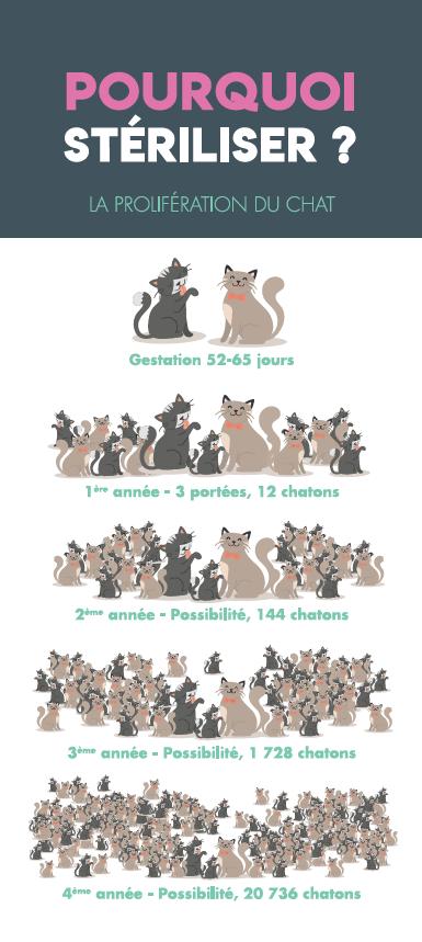 infographie sterilisation