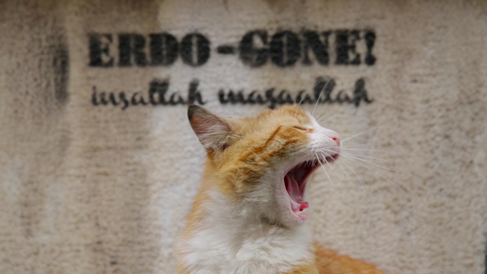 chat istanbul