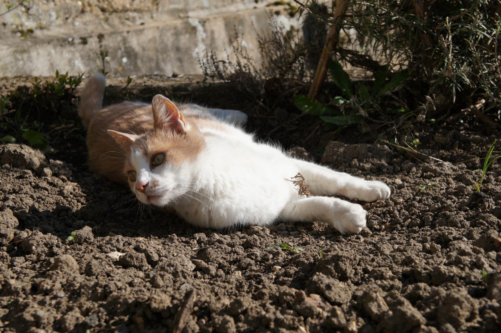 leo vieux chat