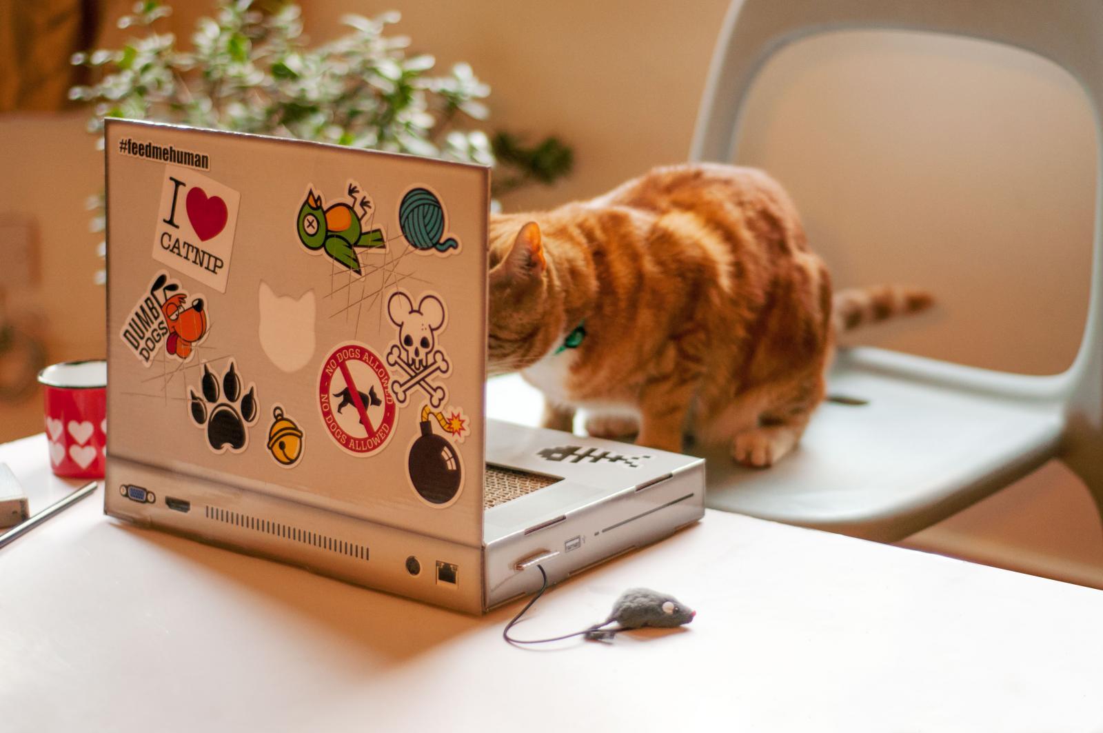 ordinateur chat grattoir