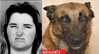 Les émotions du chien