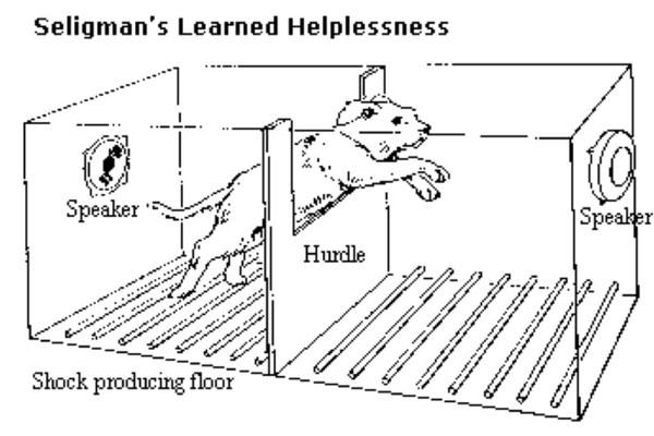 La résignation acquise du chien : un état de mal-être sous-estimé