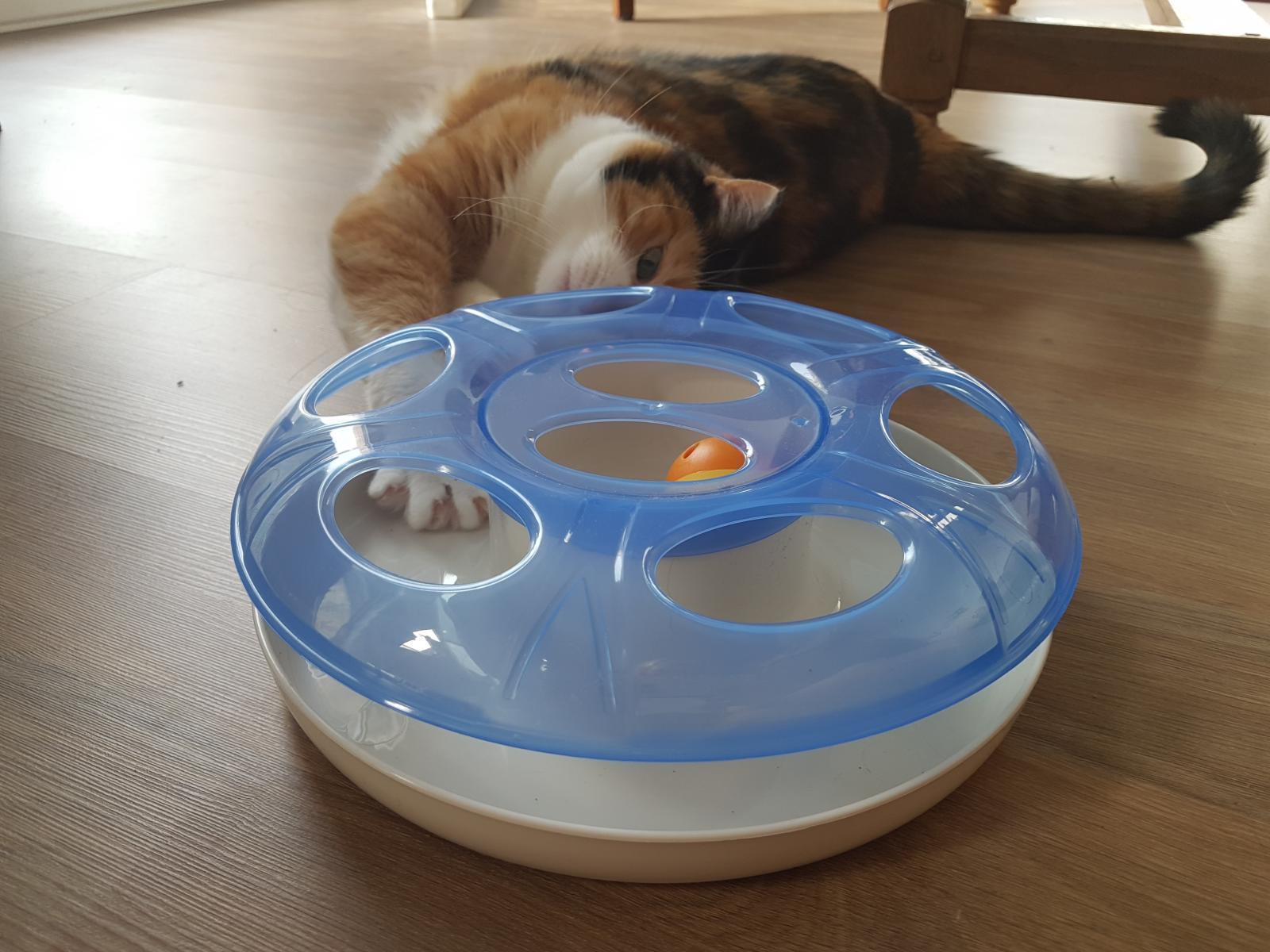 jouet chat wamiz box