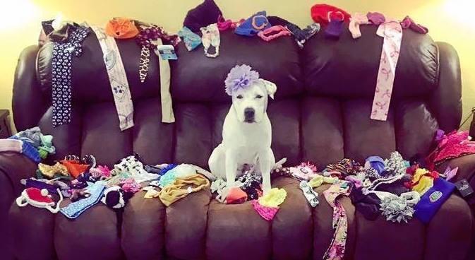 chien chapeau