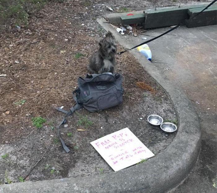 scooter le chien abandonné