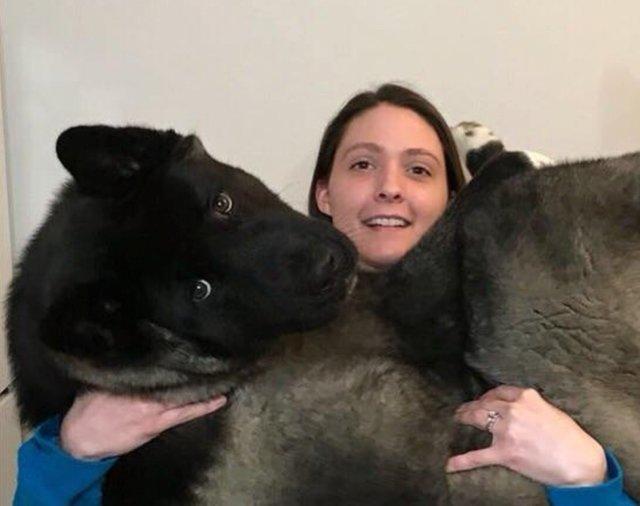 taille grand akita 6 mois