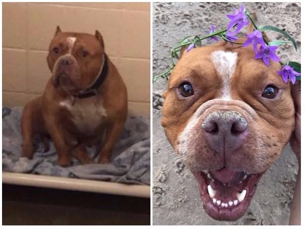 chien avant après adoption