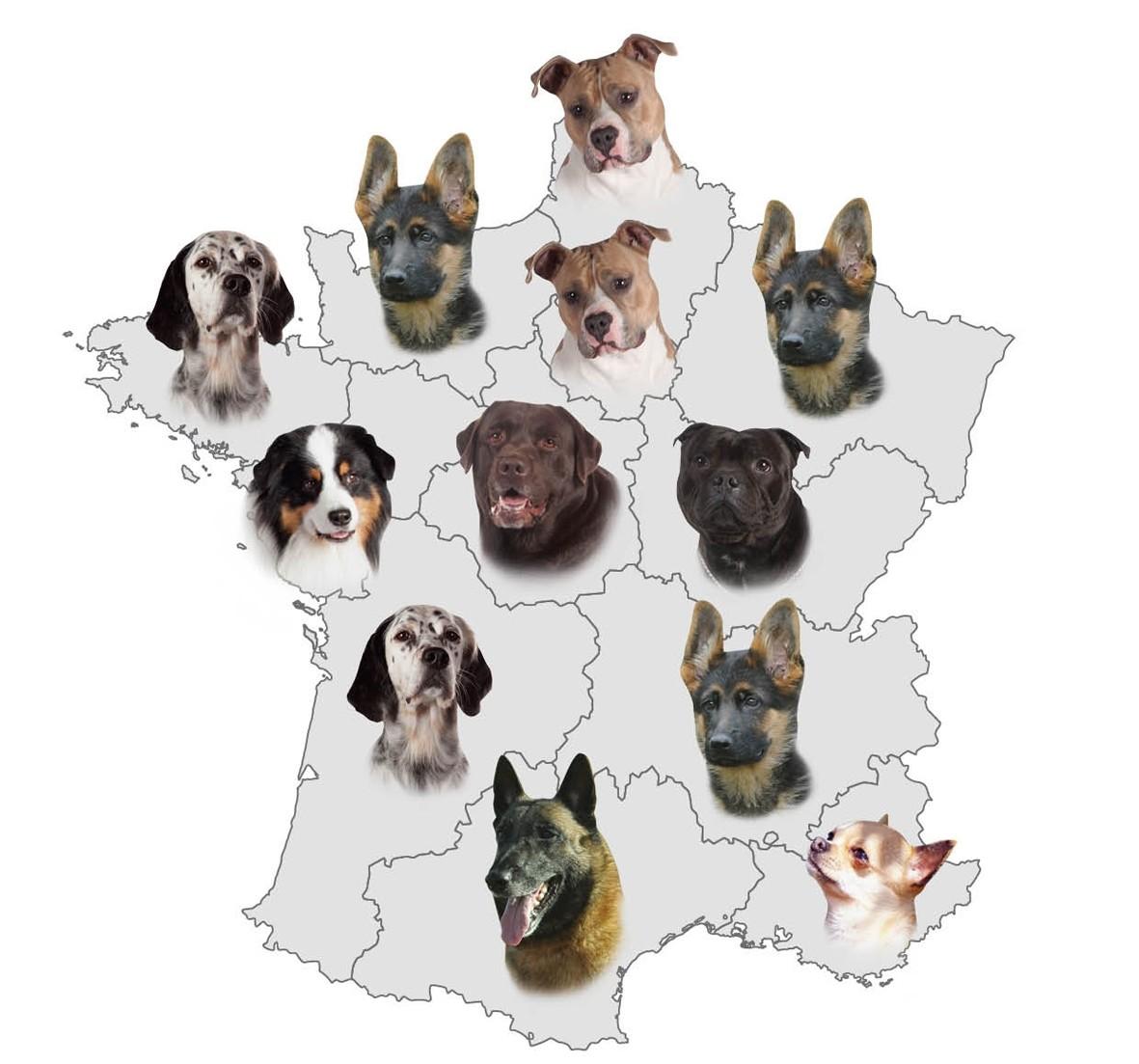 Classement régional chiens de races SCC