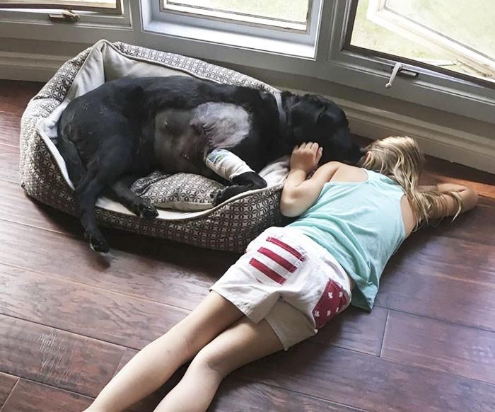 chien malade enfant