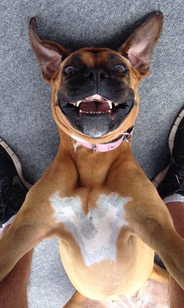 chien selfie