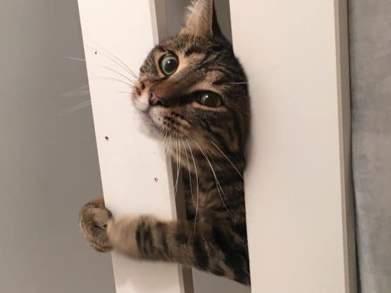 chat tigré miraculé