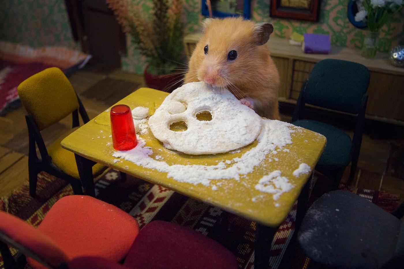 Waouh ! Ils créent une ville miniature pour des hamsters, et c'est dingue !