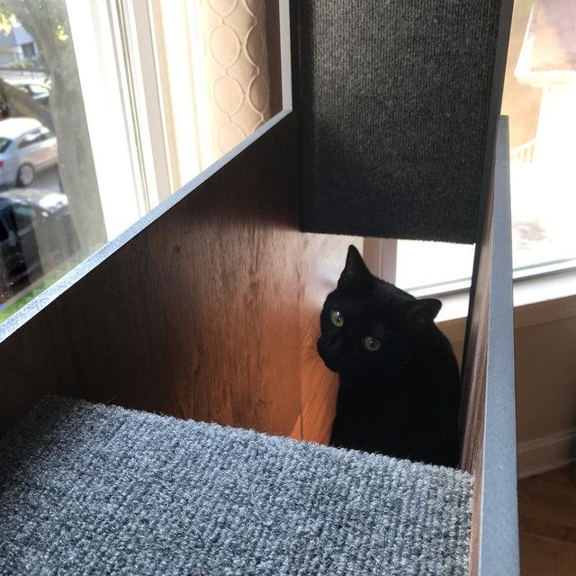 bibliothèque chat