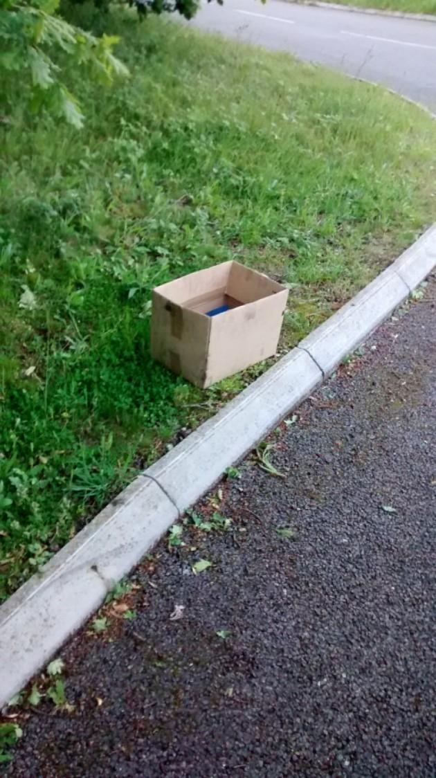boite carton chatons