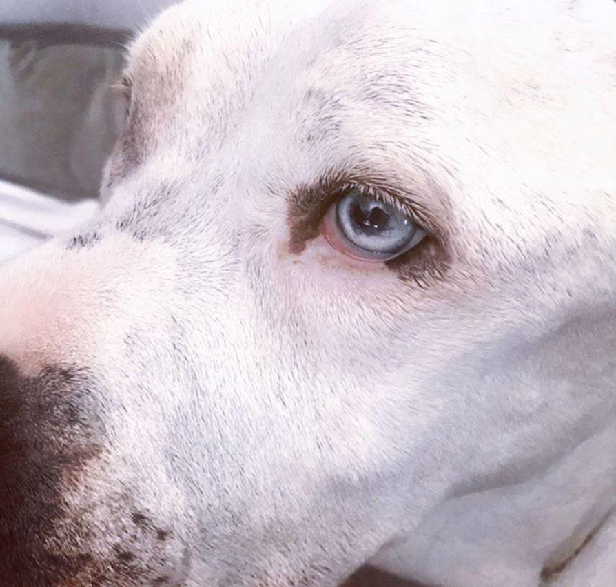 jessica alba chienne bowie