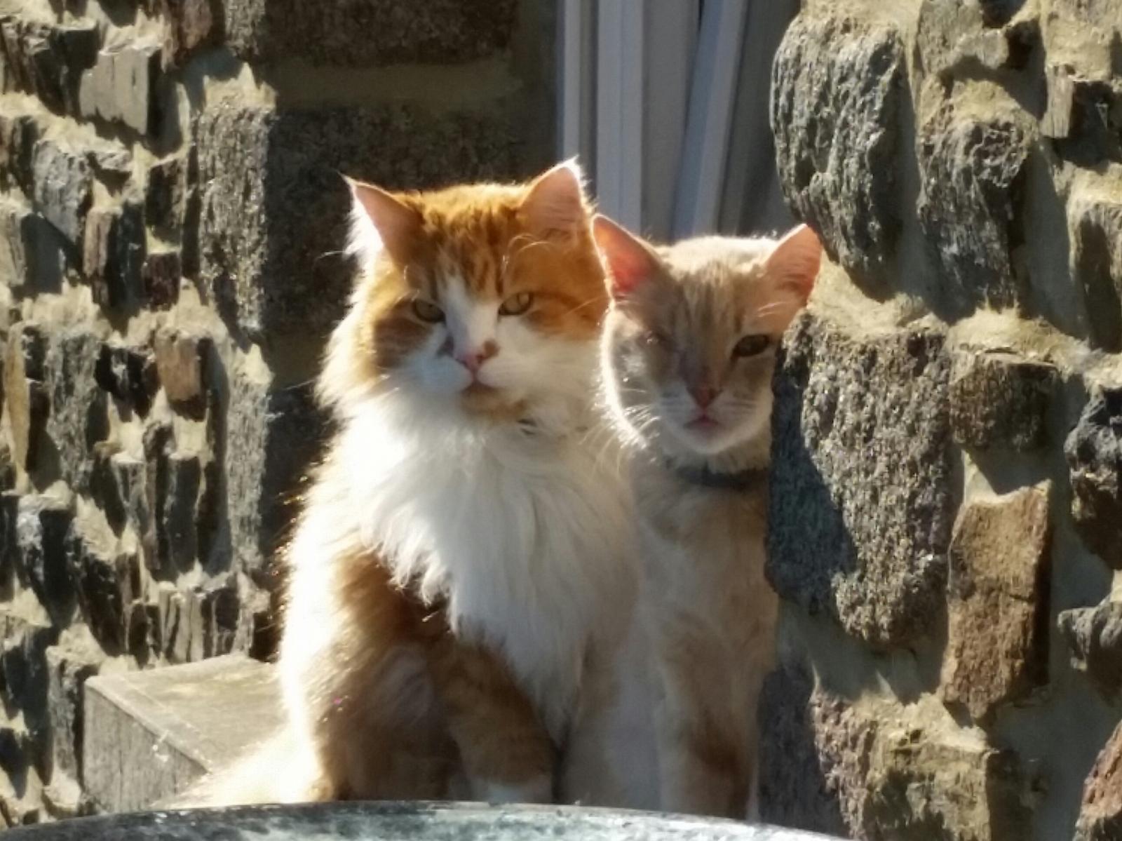 bowie chat sauvé