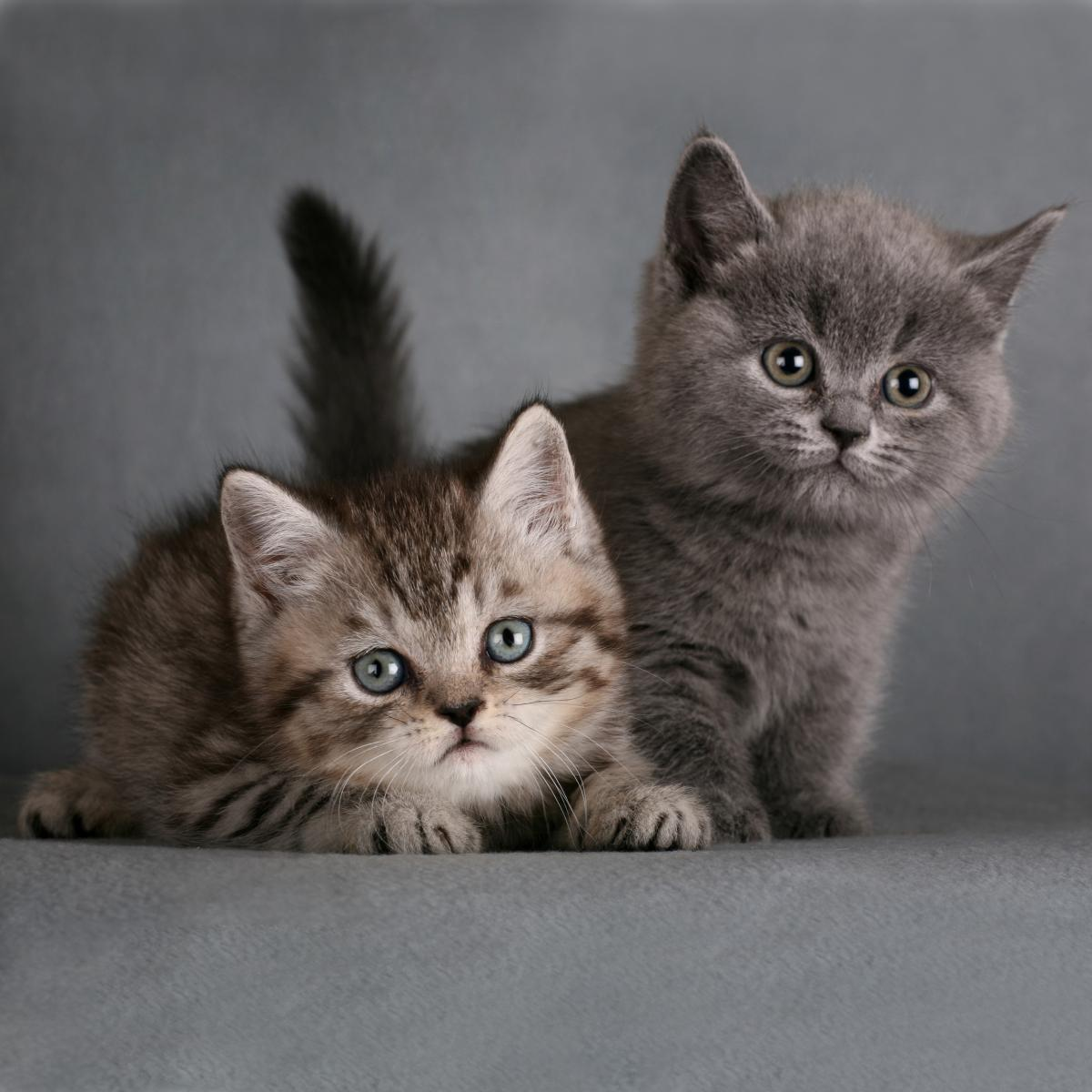chatons famille