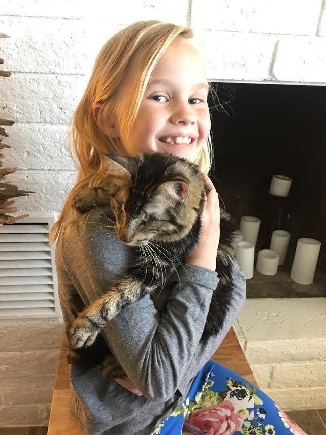 chat aveugle adoption