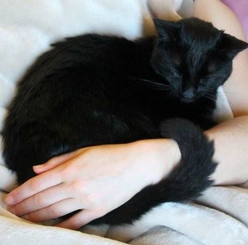 chat noir bruce