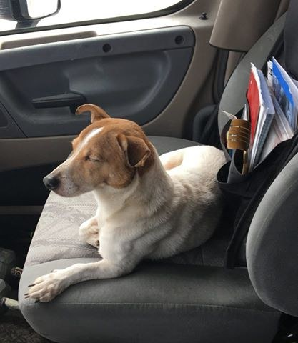 chien et lapin sauvés autoroute