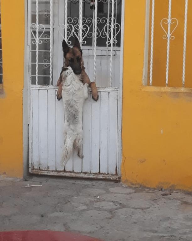 calin chiens portail