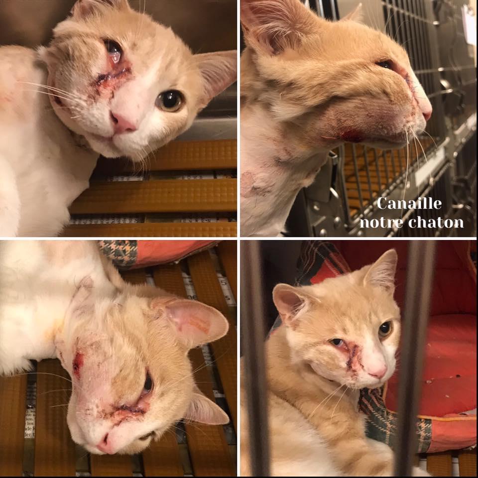 canaille chaton torturé