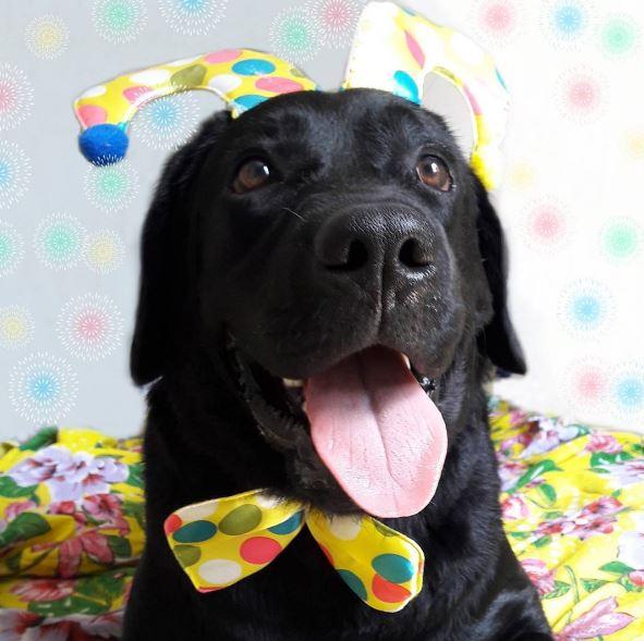 carnaval chien