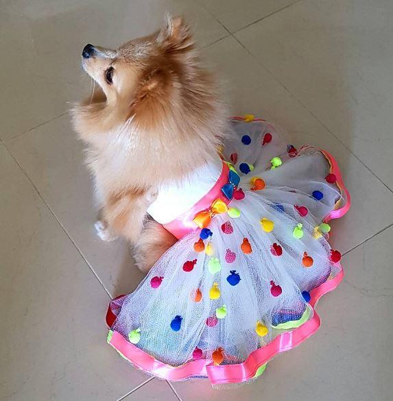carnaval chiens