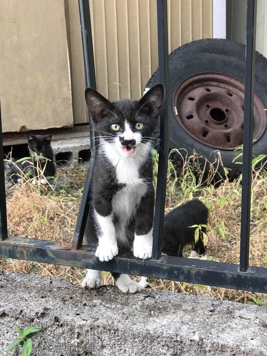 chaton tache chat