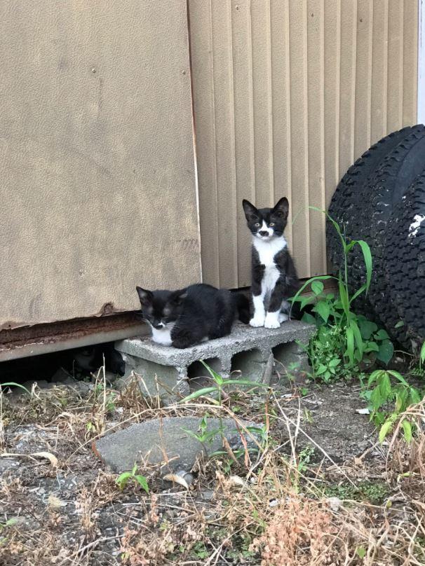 chatons noir et blanc