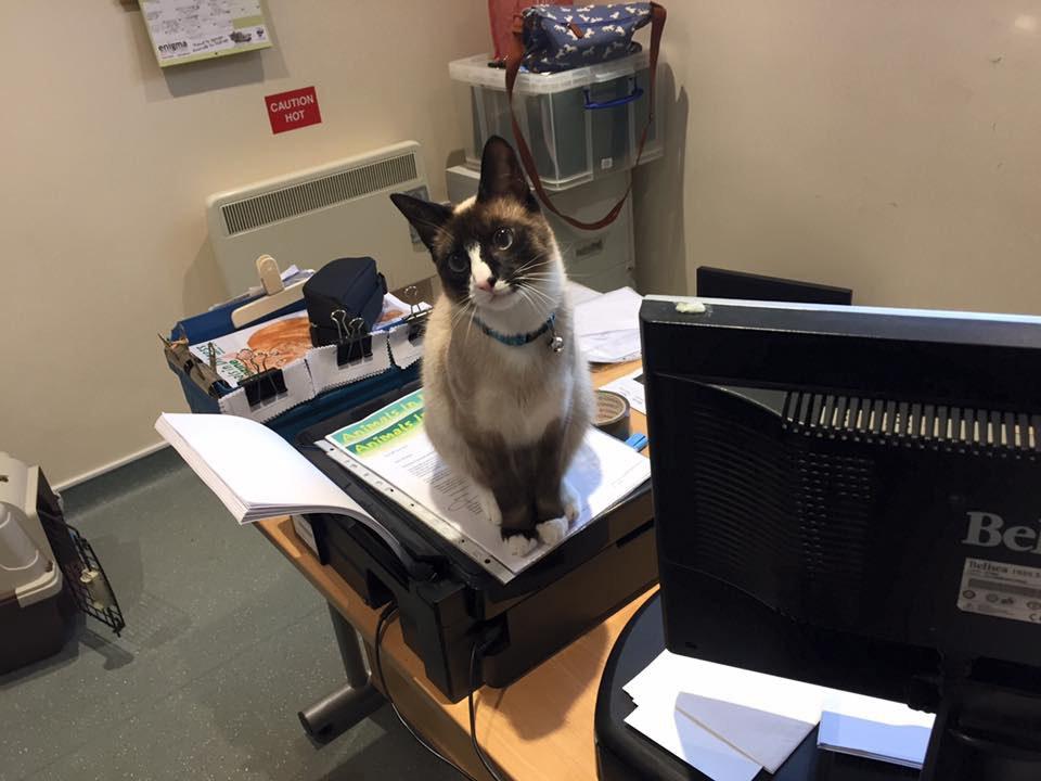 chaton champ bureau