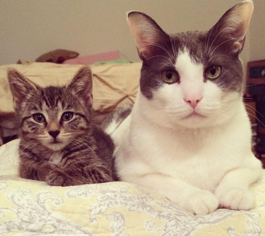 chat père adoptif chatons
