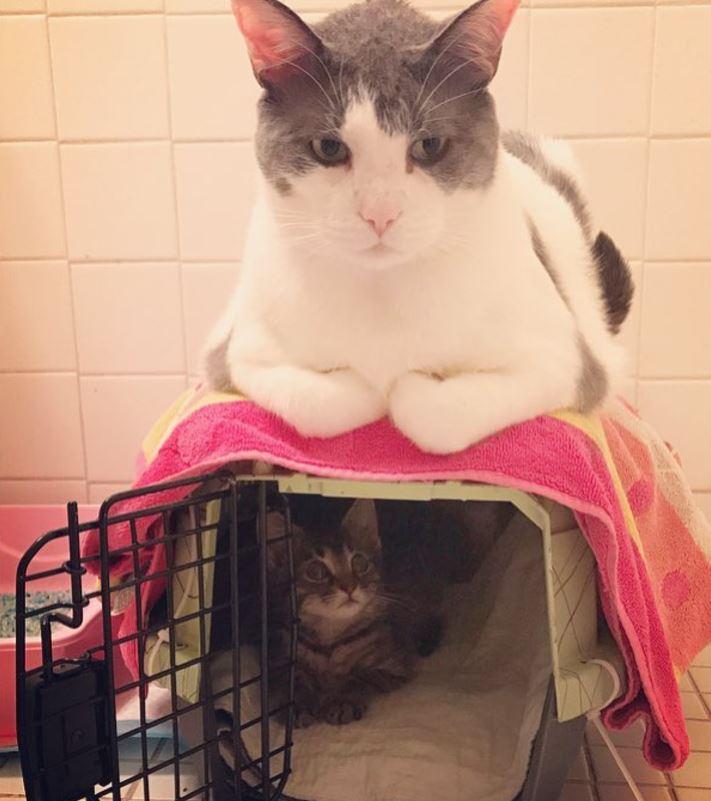 charlie chat papa adoptif