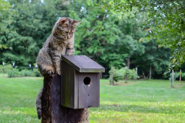 chat qui chasse sur un abri pour oiseaux