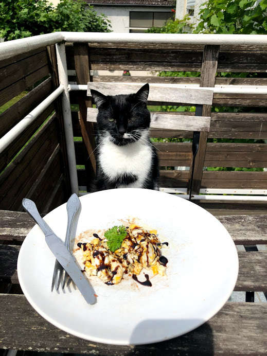 chat à table