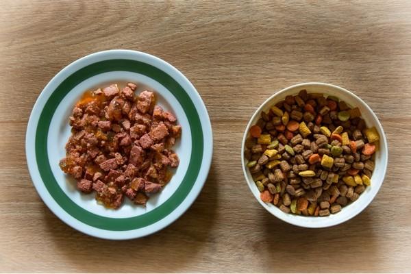 Chat et alimentation : quand et comment lui donner à manger ?
