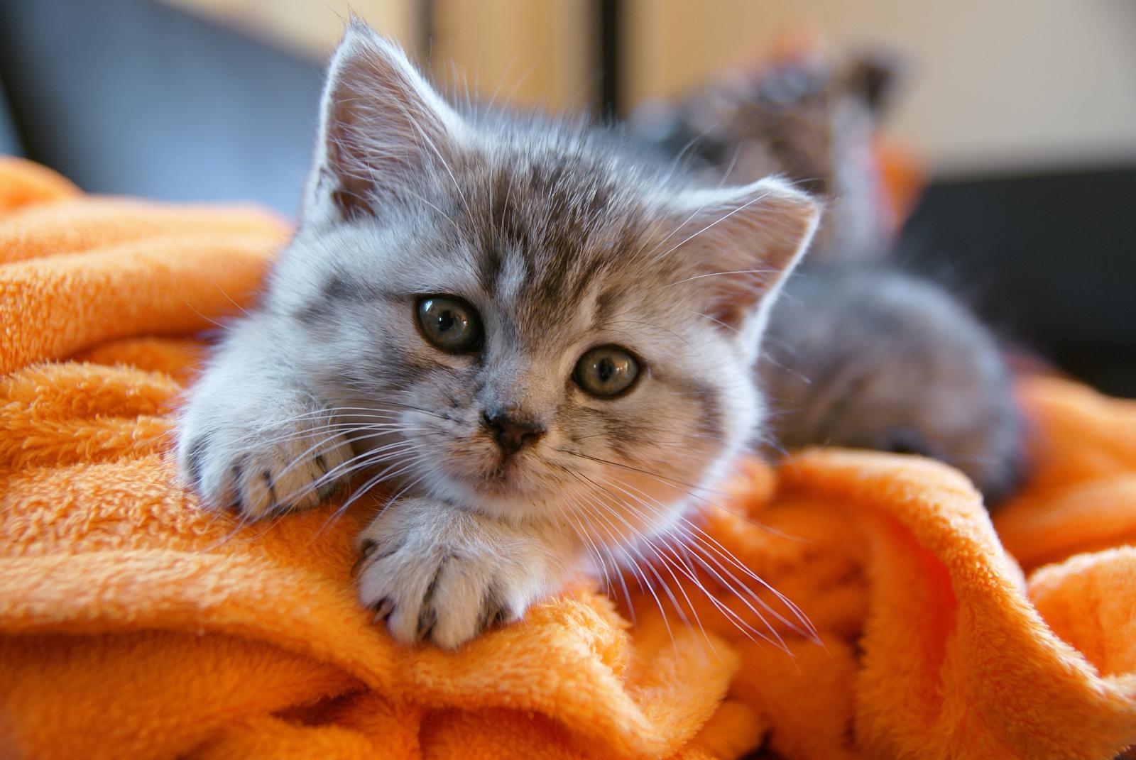 chat appartement allongé